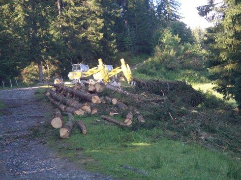 Holzernte für Hangsicherung Wallegg
